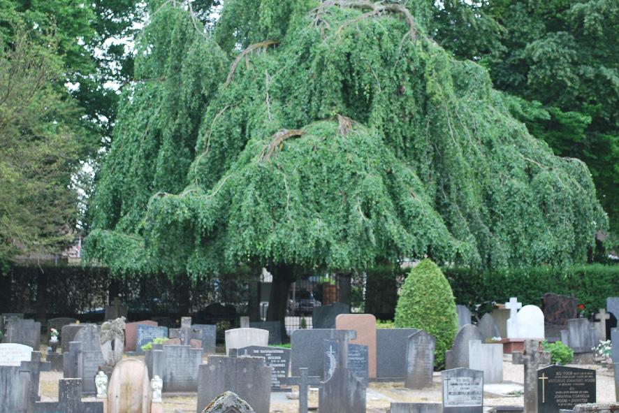 Begraafplaatsen Apeldoorn